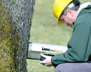 Tree Health | Tree Safety