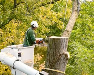 Tree Removal | Tree Safety