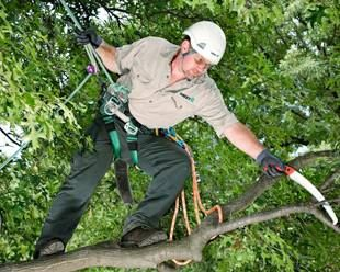 Pruning & Trimming | Tree care & maintenance
