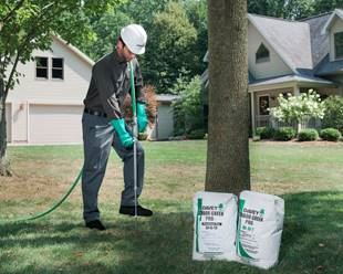 Tree Fertilization | Tree care & maintenance
