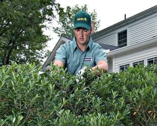 Shrub Pruning & Services | Tree care & Maintenance