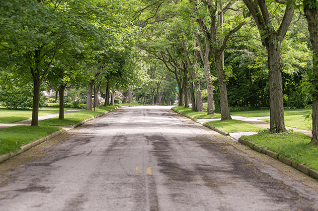 Why is urban forestry important